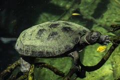 Fuori per una nuotata Fotografia Stock Libera da Diritti