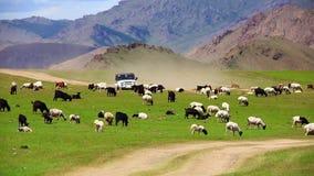 Fuori strada mongolo andante dell'automobile bello archivi video