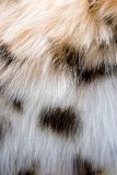 Fur 1. The fragment of leopard fur coat Royalty Free Stock Image