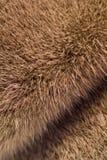 Fur Stock Image