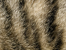 The fur. Stock Image