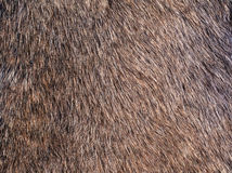 Fur. Close up of animal fur Royalty Free Stock Photos