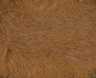 Fur. Skin of wild mammal, textured backgrounds Royalty Free Stock Image
