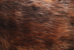 Fur Royalty Free Stock Image