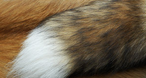 The fur royalty free stock images