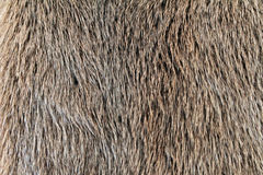 Fur. Brown fur,short haired fur royalty free stock photos