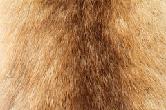 Fur. Long haired fur, brown fur stock images