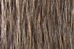 Fur. Long haired brown shiny fur royalty free stock images