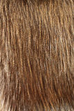 Fur. Long haired shiny brown fur stock photography