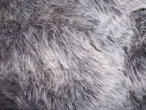 Fur. Photo of close up Faux fur Royalty Free Stock Photography