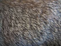 Fur. Photo of animal Fur closeup Royalty Free Stock Photos
