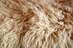 Fur #4 Royalty Free Stock Image