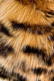 Fur. The fragment of leopard fur coat stock photos