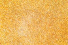 Fur abstract background It looks like fur texture Stock Photo