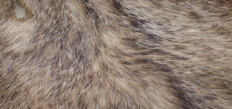 Fur Stock Photo
