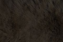 Fur Animal Textures, Bear black Stock Image