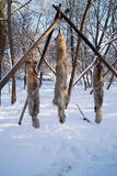 Fur animals on a tree. Moscow, Russia, 20 september, 2013 Stock Photos