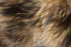 Fur background. Natural fur background and Texture Stock Image