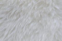 Fur background Royalty Free Stock Photos