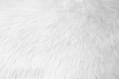 Fur background Royalty Free Stock Images