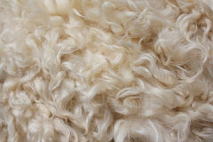 Fur background. From a sheepskin Royalty Free Stock Photography
