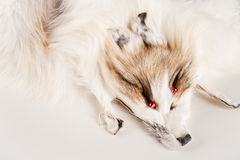 Fur background Stock Images