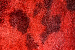 Fur background Stock Image
