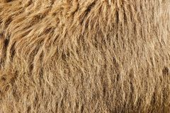 Fur background. In brown tones Stock Images