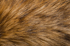 Fur background Royalty Free Stock Image