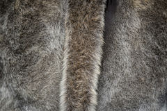 Fur background with a tail Royalty Free Stock Images