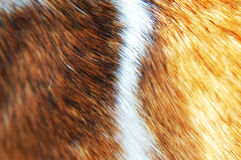 Fur background texture Royalty Free Stock Photo