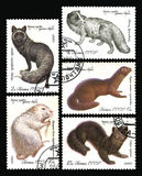 Fur-bearing Animals. USSR - CIRCA 1980: Series Fur-bearing Animals (Dark Silver Fox, Nutria white, Black sable, Mink is dark brown,Arctic fox). Postage stamps of Royalty Free Stock Photo