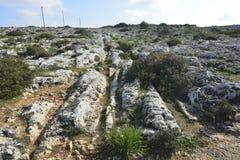 Fur bekowiska w Malta Zdjęcia Royalty Free
