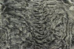 The fur is black karakul lambskin texture, background. The fur is black karakul lambskin texture Stock Images