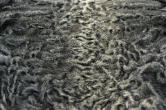 The fur is black karakul lambskin texture, background. The fur is black karakul lambskin texture Royalty Free Stock Image