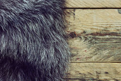 Fur black and silver fox Stock Image