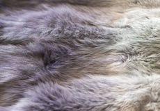 Fur blanket Royalty Free Stock Images