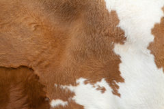 Fur carpet. Brown fur carpet with cow skin pattern background stock images