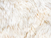 Fur carpet. Nice texture of white fur , you can use for background Royalty Free Stock Photo