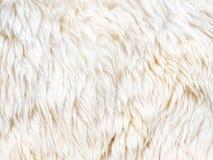 Fur carpet Royalty Free Stock Photo