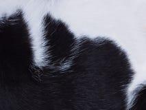 Fur cat black and white pattern. Close up fur cat black and white pattern stock photo