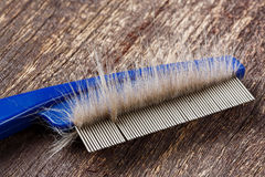 Fur on cat comb Royalty Free Stock Images
