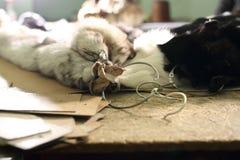 The  fur of chinchilla. Stock Photo