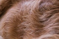 Fur closeup Royalty Free Stock Photos