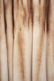 Fur coat. Royalty Free Stock Image