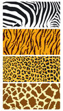 Fur coat. Leopard, zebra, tiger, giraffe stock illustration