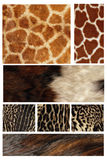 Fur coat of a tiger Royalty Free Stock Photos