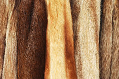 Fur coats. Various fur coats horizontal background royalty free stock photo