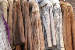 Fur coats Royalty Free Stock Photo