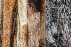 Fur coats. Close up of an animal colored fur texture arranged in coats Stock Photos